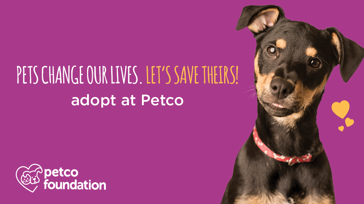 Adoption Day @ Petco | Northshore Humane Society